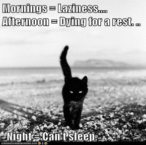 Mornings = Laziness.... Afternoon = Dying for a rest. ..     Night = Can't sleep.
