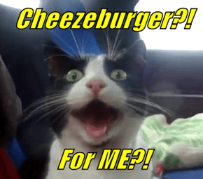 Cheezeburger?!  For ME?!