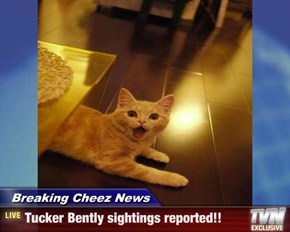Breaking Cheez News - Tucker Bently sightings reported!!
