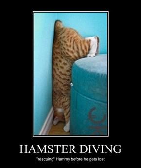 HAMSTER DIVING