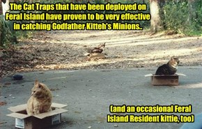 Technology at work on Feral Island..