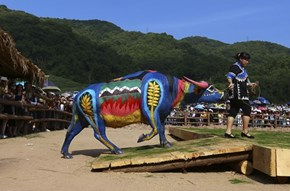 Farmers in Yunnan, China Competed for Over $15,000 With Their Painted Cows
