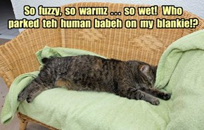 So  fuzzy,  so  warmz  . . .  so  wet!   Who  parked  teh  human  babeh  on  my  blankie!?