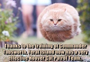 Thanks to the training of Commander Tabsworth, Feral Island now has a very effective Hoover Cat Patrol Team..