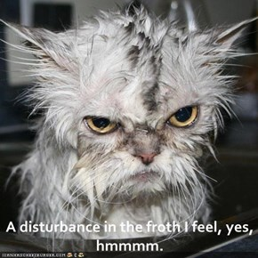 A disturbance in the froth I feel, yes, hmmmm.