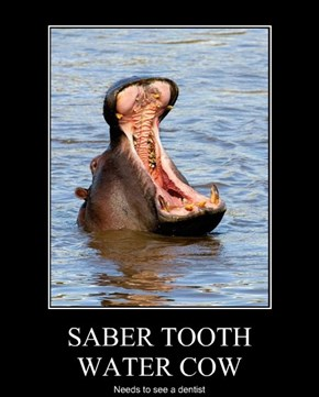 SABER TOOTH  WATER COW
