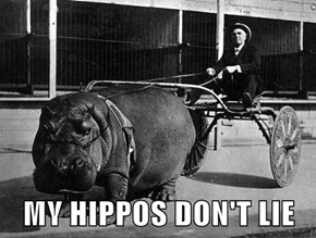 MY HIPPOS DON'T LIE