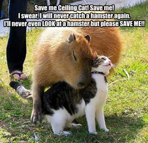 Save me Ceiling Cat! Save me! I swear, I will never catch a hamster again. I'll never even LOOK at a hamster but please SAVE ME!!