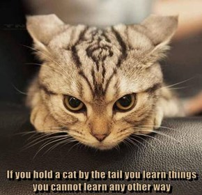 If you hold a cat by the tail you learn things you cannot learn any other way
