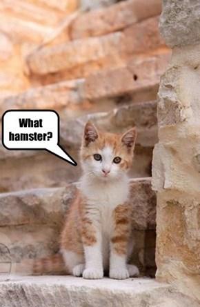 Hamster-holics Anonymous 12-step program: stuck on step one