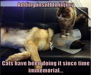 Adding insult to injury  Cats have been doing it since time immemorial...