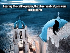 hearing the call to prayer, the observant cat, answers in a minaret