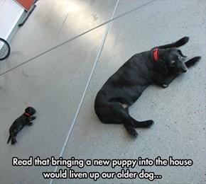 Puppy See, Puppy Do