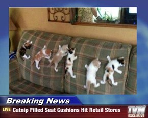 Breaking News - Catnip Filled Seat Cushions Hit Retail Stores
