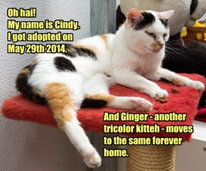 Good News: Cindy Got Adopted!