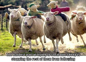 The hardest part of trying to steal one sheep is stopping the rest of them from following