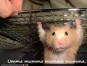 Umma mumma mumma mumma..