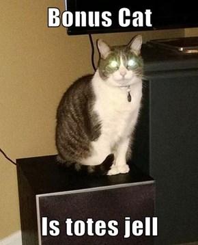 Bonus Cat  Is totes jell