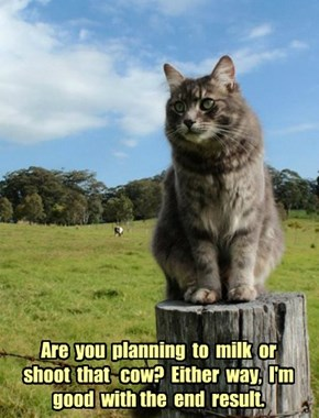 Are  you  planning  to  milk  or  shoot  that   cow?  Either  way,  I'm  good  with the  end  result.