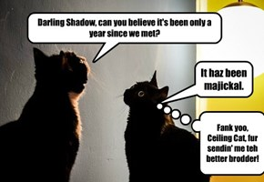 Rufus and Shadow share some Prom Memories.