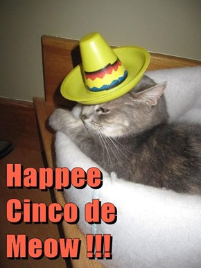 Happee       Cinco de Meow !!!