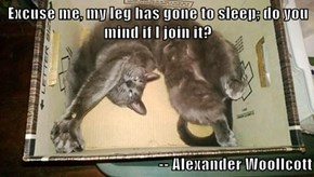 Excuse me, my leg has gone to sleep; do you mind if I join it?  -- Alexander Woollcott