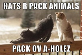 KATS R PACK ANIMALS  PACK OV A-HOLEZ