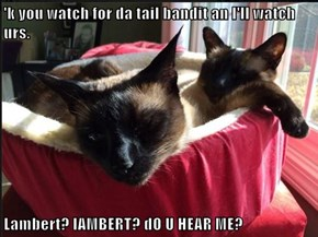 'k you watch for da tail bandit an I'll watch urs.  Lambert? lAMBERT? dO U HEAR ME?