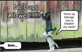 No Dogs Allowed!!!!!!!