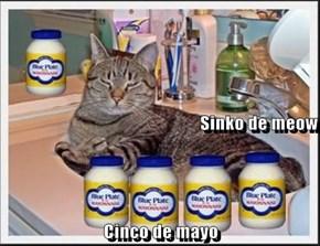 Sinko de meow Cinco de mayo