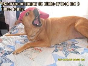 BBaarrrooo! puppy de cinko or feed me 5 times today.