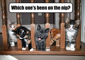 Which one's been on the nip?
