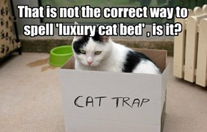That is not the correct way to spell 'luxury cat bed' , is it?