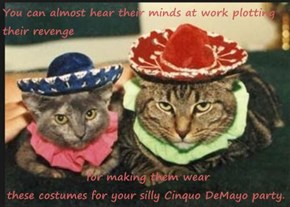 You can almost hear their minds at work plotting their revenge   for making them wear                                                          these costumes for your silly Cinquo DeMayo party.