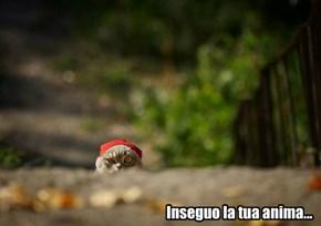 """Vatican Cat """"Presto"""""""