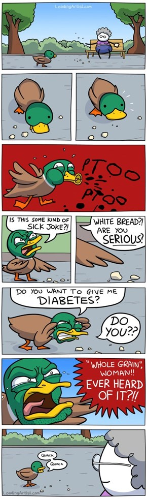 The Meaning Behind a Duck's Quacks