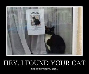 HEY, I FOUND YOUR CAT
