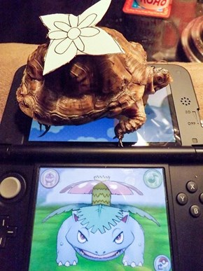 Pokémon Games Are Getting Super Realistic
