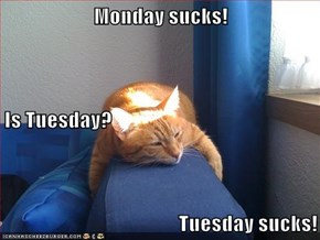 Monday sucks! Is Tuesday? Tuesday sucks!