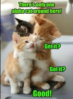 Top Cat!