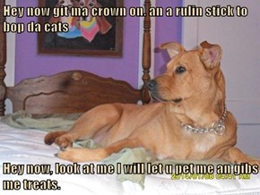 Hey now git ma crown on. an a rulin stick to bop da cats  Hey now, look at me I will let u pet me an gibs me treats.