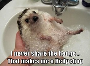 I never share the hedge...                 That makes me a Hedgehog