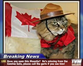 Breaking News - Have you seen this Mountie?  He's missing from the Comfee Sofa, please call the gurls if you see him!