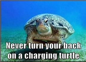 Never turn your back on a charging turtle