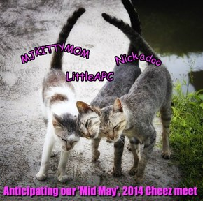 Anticipating our 'Mid May', 2014 Cheez meet