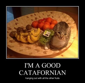 I'M A GOOD CATAFORNIAN