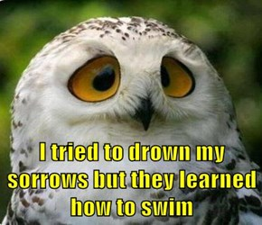 I tried to drown my sorrows but they learned how to swim