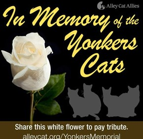 Read about these poor slaughtered cats and the memorial service for them here:  http://yonkers.dailyvoice.com/events/memorial-set-cats-killed-yonkers