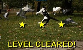 ★     ★     ★ LEVEL CLEARED!