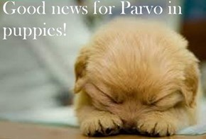 http://www.huffingtonpost.c om/2014/06/01/parvo-trial-p uppy-virus_n_5427606.html?& ncid=tweetlnkushpmg00000067